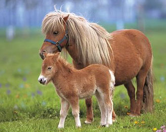 Les chevaux de cl mence poneys - Tchoupi et le poney ...